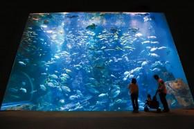 男鹿水族館GAO写真
