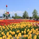 Tonami Tulip Fair Photo