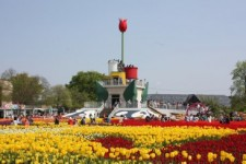 Tonami Tulip Fair Photo