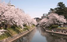 Cherry blossom viewing at Matsukawa Park Photo