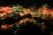 由志園 秋の紅葉ライトアップ写真