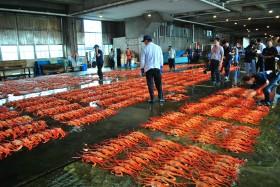新湊漁港の昼セリ写真