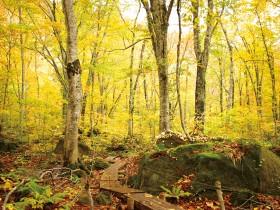 岳岱自然観察教育林(散策 約1 ㎞)写真