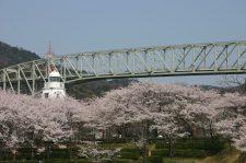 境台場公園桜まつり写真