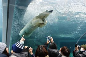 さっぽろ円山動物園写真