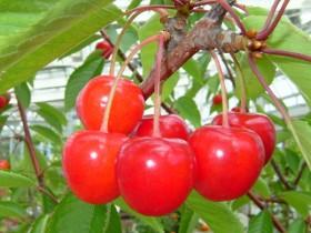 FruitPhoto